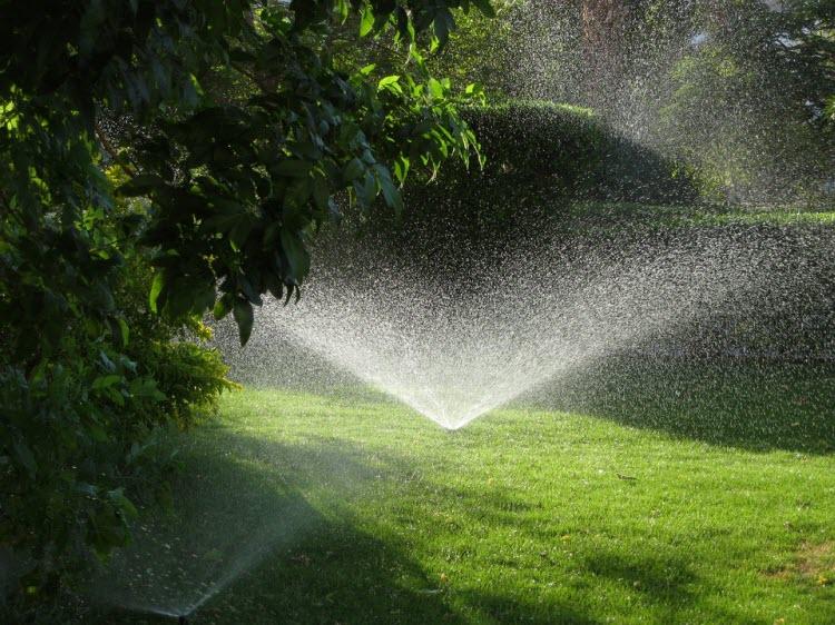 Zavlažovaný trávník