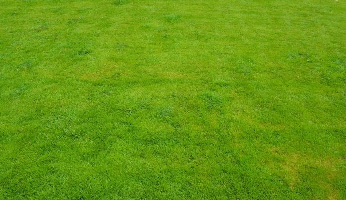 Zelený odolný trávník