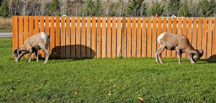 Levný dřevěný plot z latí