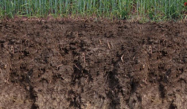 Řez ornou půdou